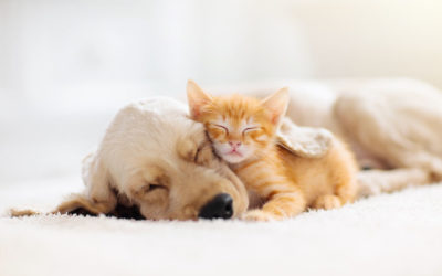Pet Friendly Assisted Living Rome