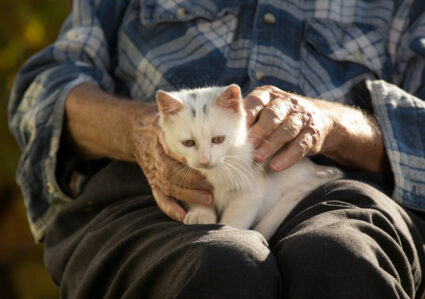 elderly man holds cute kitten as part of pet therapy for seniors of Rome
